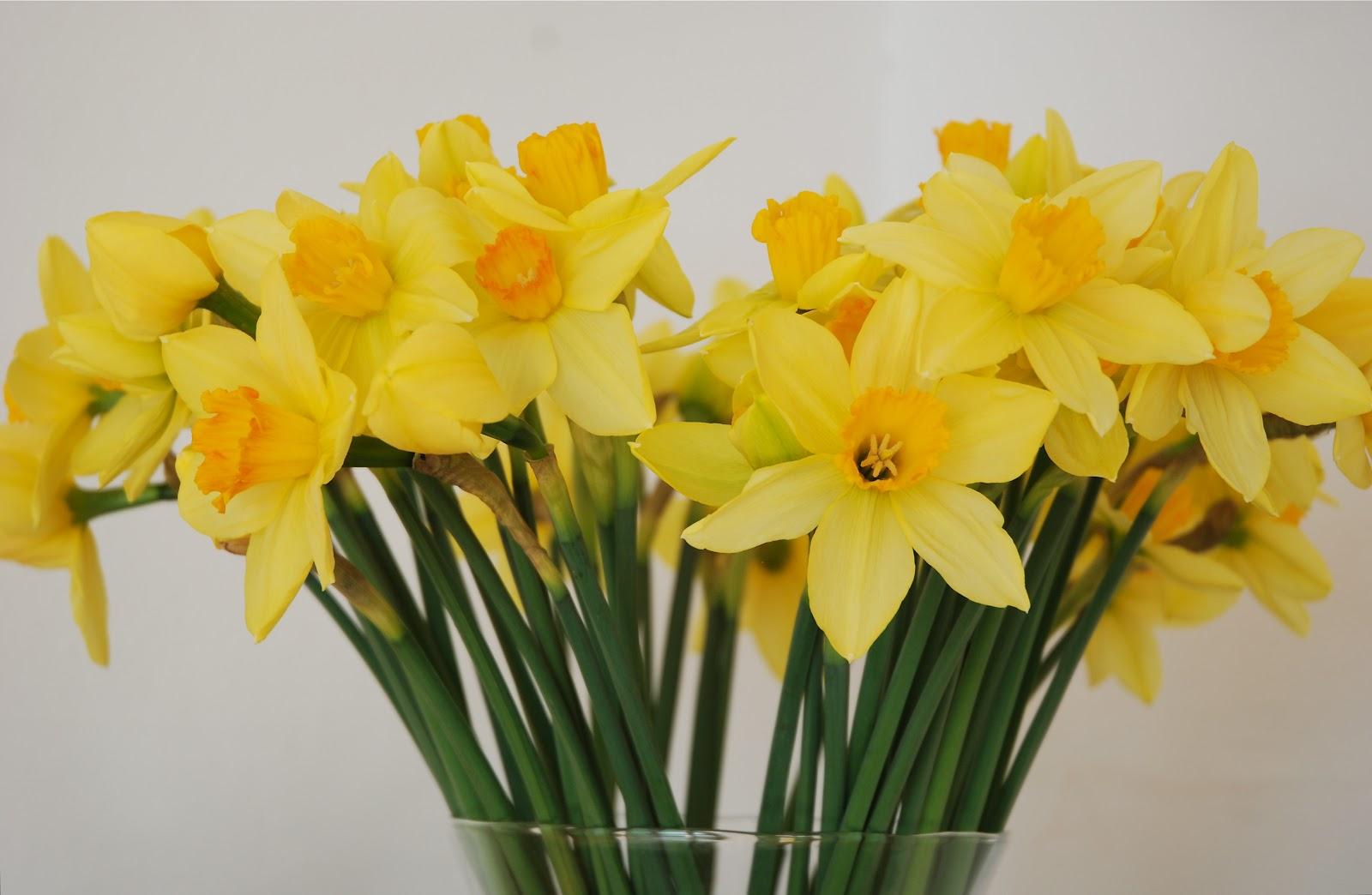 Narciss- Påskelilje & Pinselilje